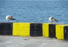 Free Tern2 Royalty Free Stock Images - 1117549