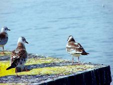 Free Tern3 Stock Photos - 1117573