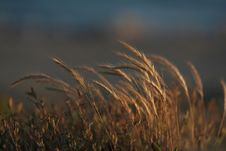 Free Straw In Sunset Royalty Free Stock Image - 1119966