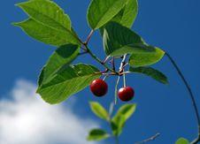 Free Cherry Berries Stock Photos - 11101053