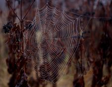 Free Spider Web, Water, Close Up, Moisture Royalty Free Stock Images - 111026049