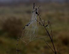 Free Spider Web, Wildlife, Spider, Arachnid Royalty Free Stock Photo - 111026065