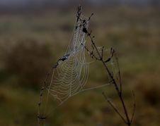 Free Spider Web, Wildlife, Spider, Arachnid Royalty Free Stock Photo - 111026065