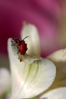 Free Insect, Flower, Macro Photography, Flora Stock Image - 111026081