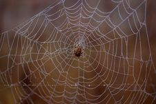 Free Spider Web, Arachnid, Spider, Invertebrate Stock Photos - 111026093