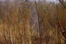 Free Spider Web, Wildlife, Grass Family, Grass Stock Image - 111026151