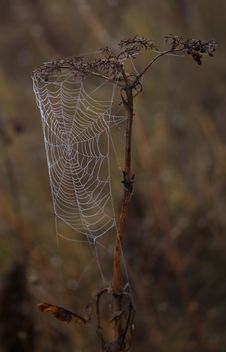 Free Spider Web, Arachnid, Spider, Branch Stock Photo - 111026160