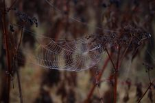 Free Spider Web, Arachnid, Wildlife, Spider Royalty Free Stock Image - 111026246