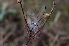 Free Spider Web, Spider, Invertebrate, Arachnid Stock Photos - 111026293