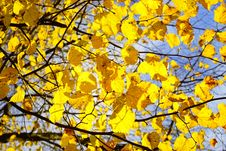 Free Yellow, Branch, Tree, Leaf Royalty Free Stock Photo - 111026605