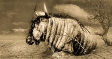 Free Horse, Horse Like Mammal, Mane, Black And White Stock Photos - 111026703