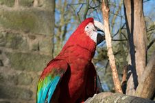 Free Macaw, Bird, Fauna, Parrot Royalty Free Stock Photo - 111027085