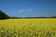 Free Rapeseed, Field, Canola, Yellow Royalty Free Stock Image - 111027236