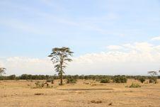 Free Savanna, Ecosystem, Sky, Grassland Royalty Free Stock Photo - 111027685