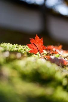 Free Leaf, Autumn, Close Up, Maple Leaf Royalty Free Stock Photos - 111027988
