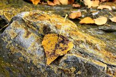 Free Rock, Leaf, Geology, Organism Royalty Free Stock Images - 111028589