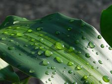 Free Water, Green, Dew, Drop Royalty Free Stock Image - 111028606