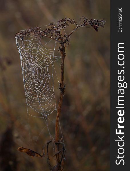 Spider Web, Arachnid, Spider, Branch