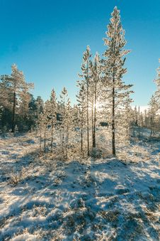 Free Snow Covered Forest Under Clear Blue Sky Royalty Free Stock Image - 111070306