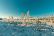 Free Landscape Photography Of Snowy Forest Under Clear Sky Stock Photo - 111070330