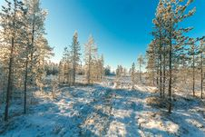 Free Snow Covered Field And Green Leaf Trees Under Blue Sky Royalty Free Stock Image - 111070346