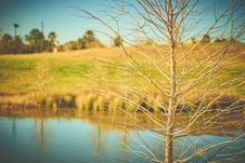 Free Selective Focus Photography Of Bare Tree With Body Of Water Background Stock Photos - 111070363