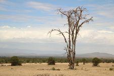 Free Ecosystem, Savanna, Sky, Tree Stock Photo - 111108480