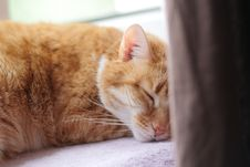Free Cat, Whiskers, Skin, Small To Medium Sized Cats Stock Images - 111108524