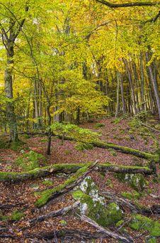 Free Woodland, Nature, Ecosystem, Leaf Royalty Free Stock Image - 111108806