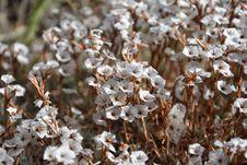 Free Flora, Flower, Spring, Plant Royalty Free Stock Photo - 111109895
