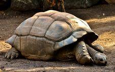 Free Tortoise, Turtle, Terrestrial Animal, Fauna Stock Photos - 111110043