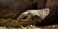 Free Tortoise, Terrestrial Animal, Turtle, Fauna Stock Photo - 111110160
