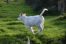 Free Goats, Goat, Pasture, Cattle Like Mammal Royalty Free Stock Images - 111110669