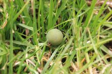 Free Grass, Grass Family, Plant Stock Images - 111110754