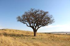 Free Ecosystem, Tree, Savanna, Grassland Stock Photo - 111111280