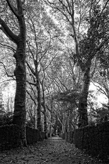 Free Tree, Woodland, Branch, Black And White Royalty Free Stock Photography - 111111367