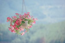 Free Pink Petaled Flower Plant Inside White Hanging Pot Stock Images - 111170254