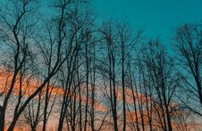 Free Photography Of Leafless Trees During Golden Hour Royalty Free Stock Photos - 111170268