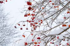 Free Low Angle Shot Of Leafless Tree With Orange Flowers Stock Photo - 111170360