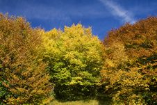 Free Colorful Autumn Leaves Stock Photography - 11122402
