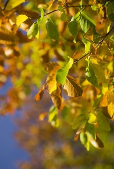 Free Colorful Autumn Leaves Stock Images - 11122444