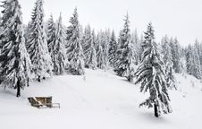 Free Snowy Pines Stock Photography - 11122482