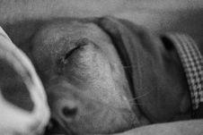 Free Grayscale Photo Of Dog Sleeping Stock Images - 111217194