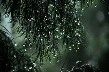 Free Close-Up Photography Of Wet Leaves Stock Images - 111277674