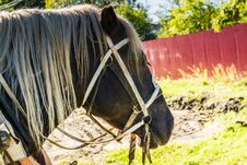 Free Portrait Of Harnessed Horse Stock Photo - 111288540