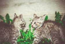 Free Tabby Kitten Play Outside Retro Stock Photo - 111289010