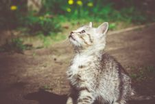 Free Tabby Kitten Play Outside Retro Stock Images - 111289044