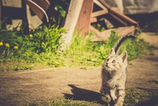 Free Tabby Kitten Play Outside Retro Royalty Free Stock Photography - 111289077