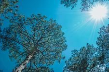 Free Trees Under The Sun Royalty Free Stock Photography - 111364587