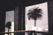 Free Silhouette Photo Of Two Palm Trees Royalty Free Stock Image - 111364656